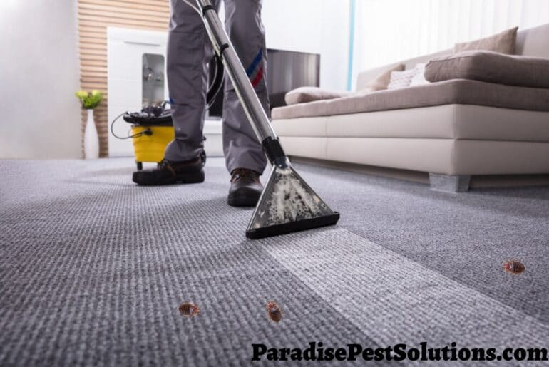 Carpet cleaner against bed bugs