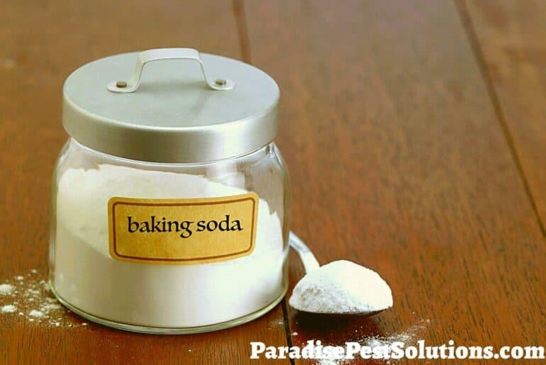 Does baking soda kill bed bugs