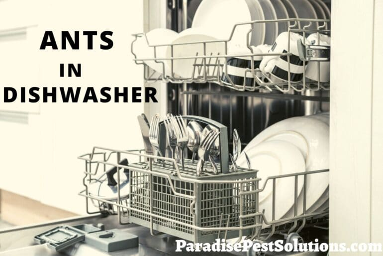 Ants in Dishwasher