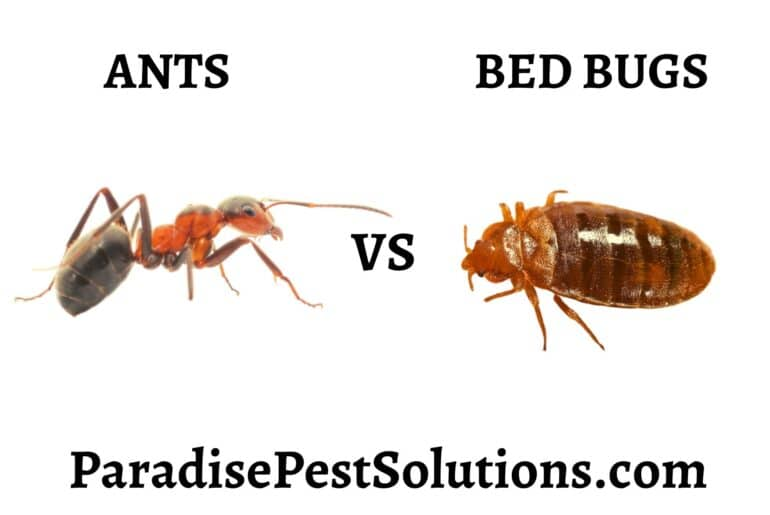 Ants vs Bed Bugs