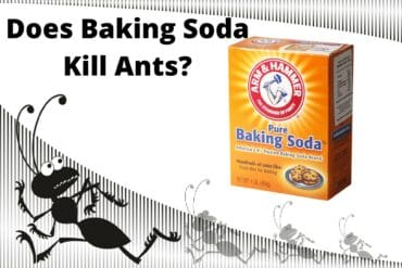 Does Baking Soda Kill Ants
