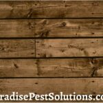 Do termites eat pressure treated wood