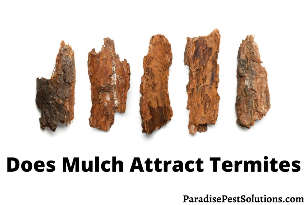 Does Mulch Attract Termites